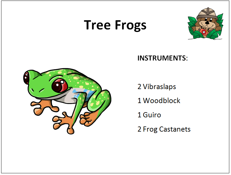 treefrog rainforest